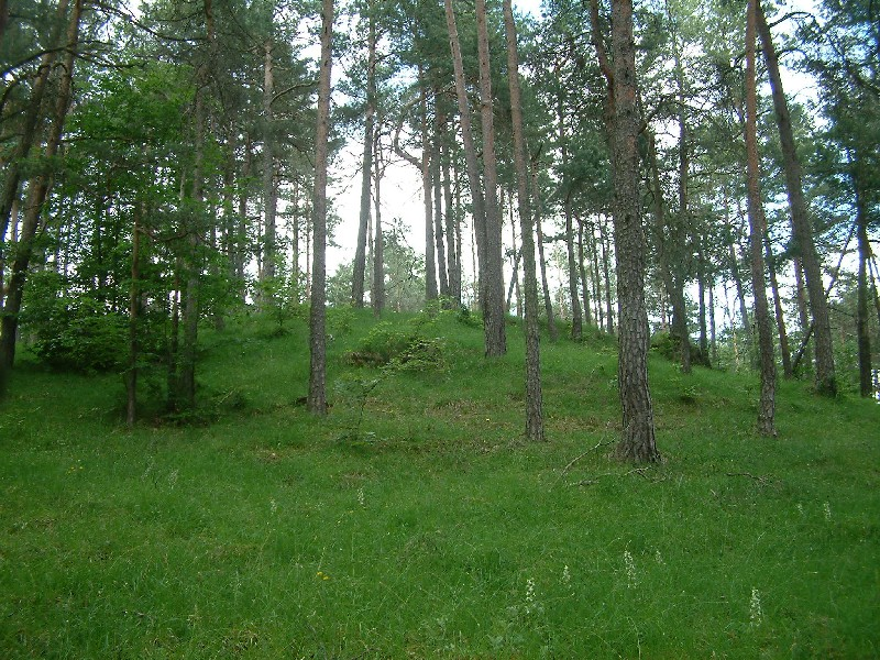 Dolomitkiefernwald 1