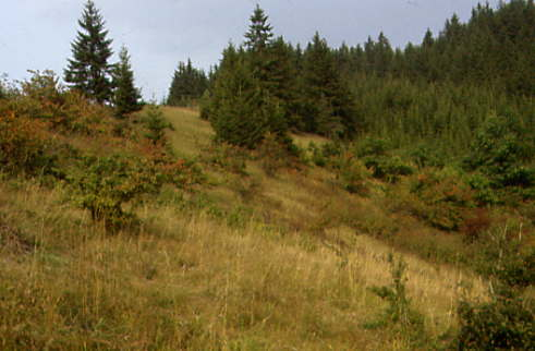 Halbtrockenrasen verbuscht bei Oberrodach